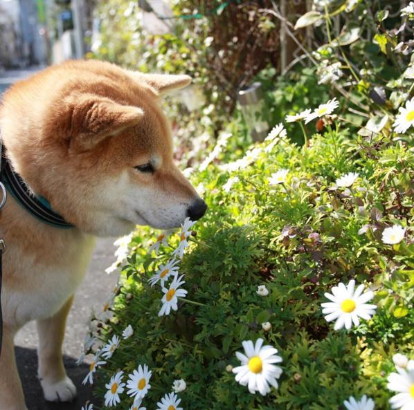 much spring so daisy wow