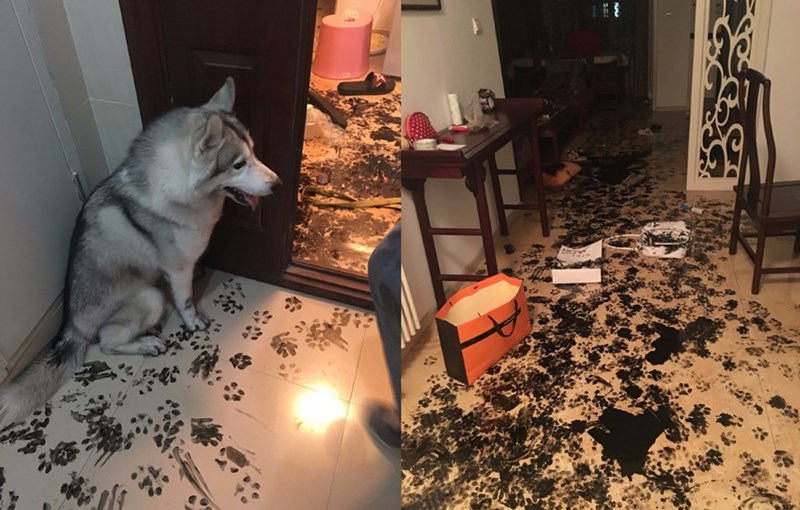 aspiring artist dog made a huge mess