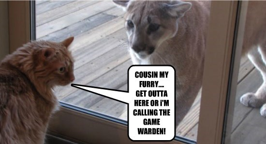Cousin My Furry Get Outta Here Or I M Calling The Game