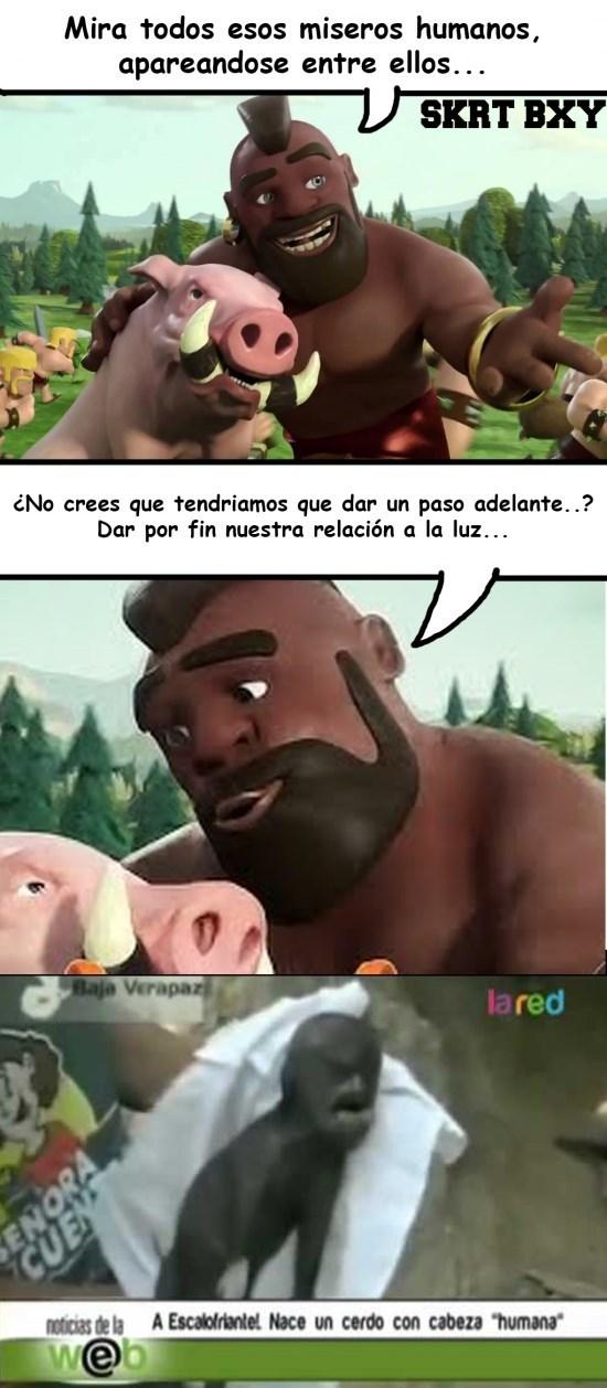 cerdo humano