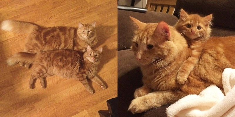 These Cats Look Like Twins, but They're Actually Uncle and Nephew