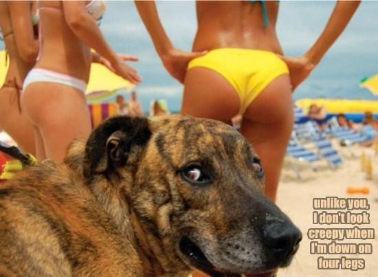 dogs creepy down four caption legs - 8765557504