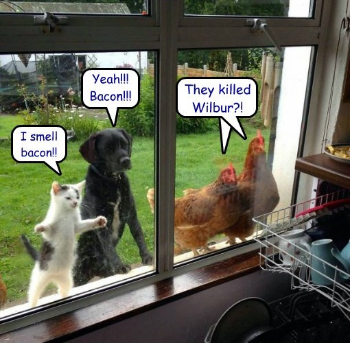 wilbur,dogs,chicken,Cats