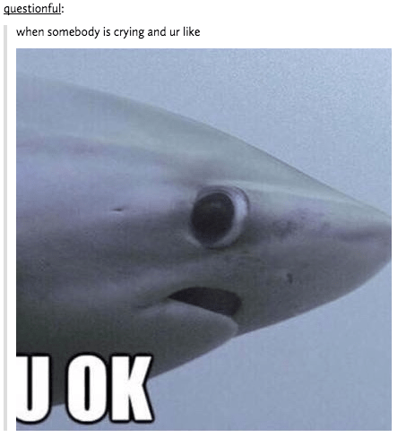 sharks friendship memes I Am Here For You