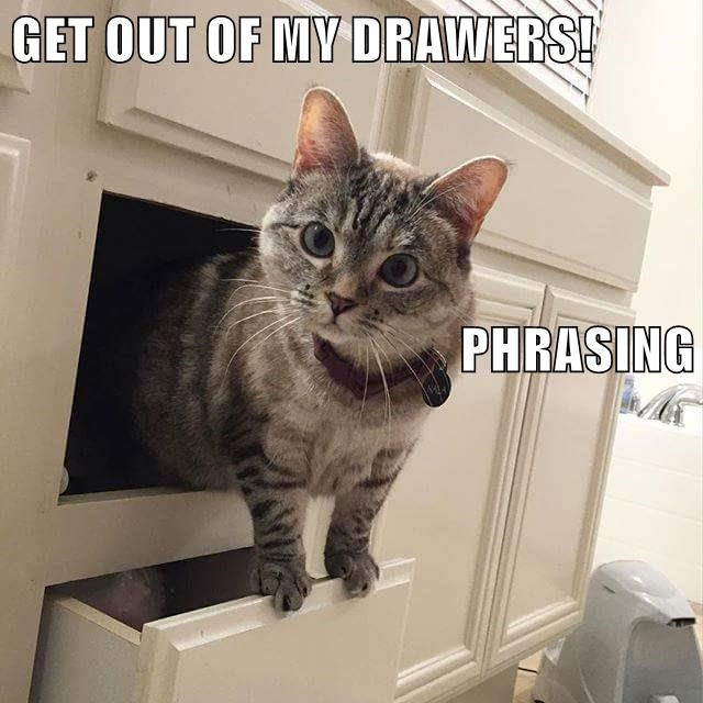 animals cat drawers phrasing caption - 8765766144