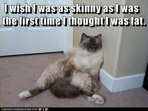 animals cat skinny time fat thought wish - 8765801984