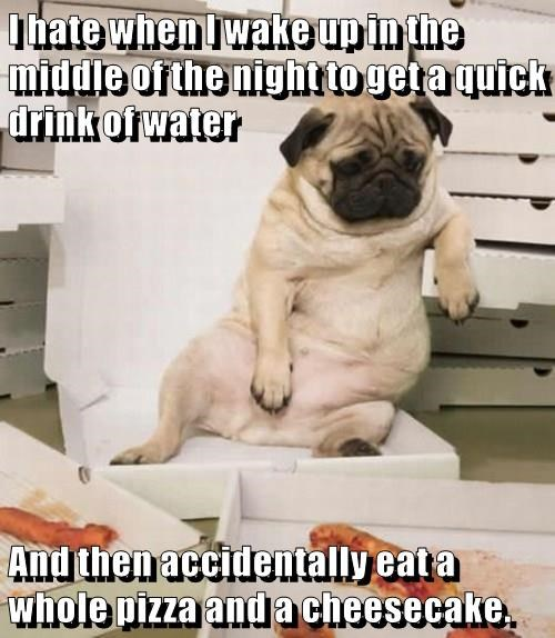 animals dogs wake up pizza cheesecake water night caption - 8765971968