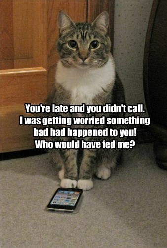 cat worried caption late - 8766075392