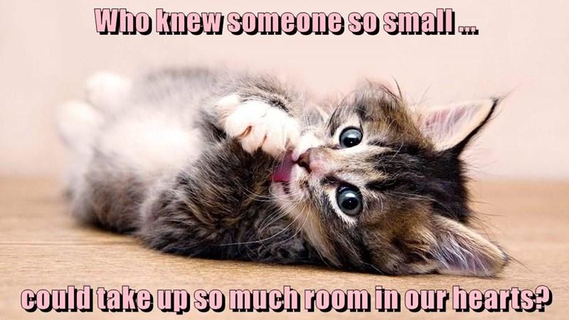 animals much kitten room hearts small - 8766109952