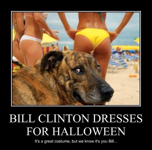 dogs halloween caption bill clinton - 8766145024