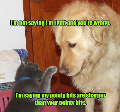 bits cat dogs right wrong pointy caption - 8766168320