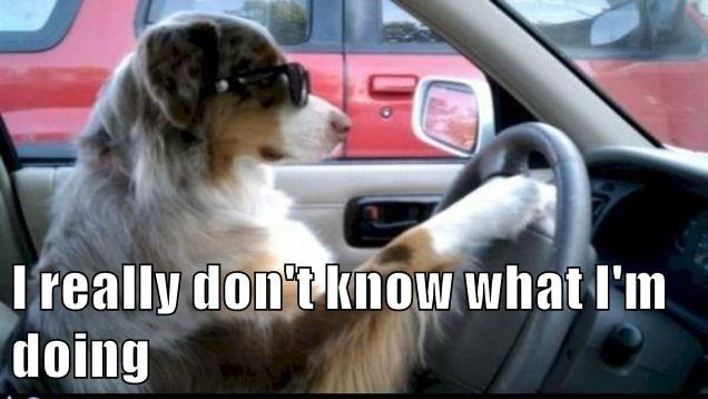 animals caption dogs driving