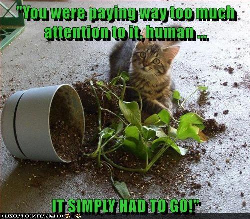 animals Cats caption plants mess - 8766204416
