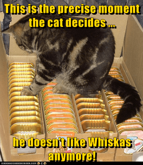 animals precise like cat doesnt moment whiskas caption - 8766206464