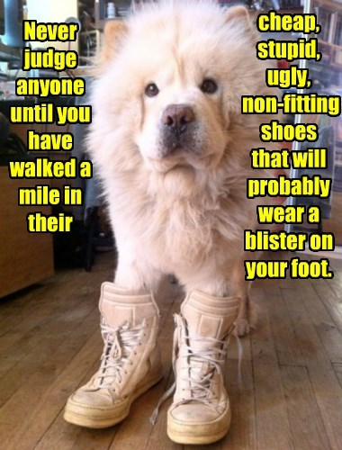 caption,dogs,shoes