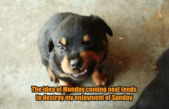 caption dogs monday - 8766287616
