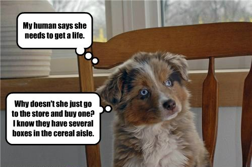 dogs get a life caption cereal