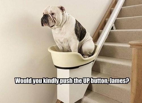 dogs bulldog caption - 8766303488