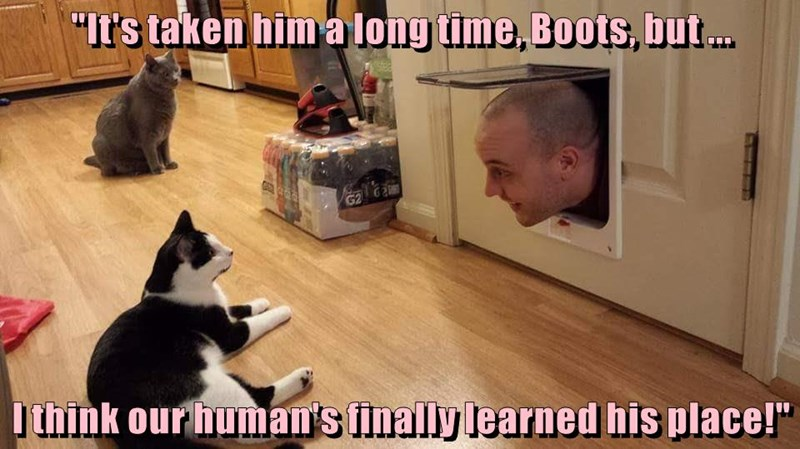 animals learned place human caption Cats - 8766317056