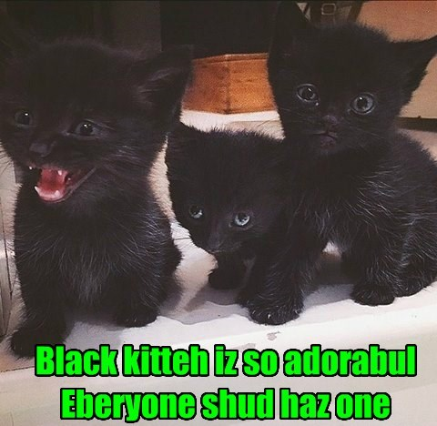 adorable caption Cats black - 8766328320