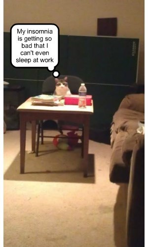 cat work insomnia sleep caption cant - 8766365952