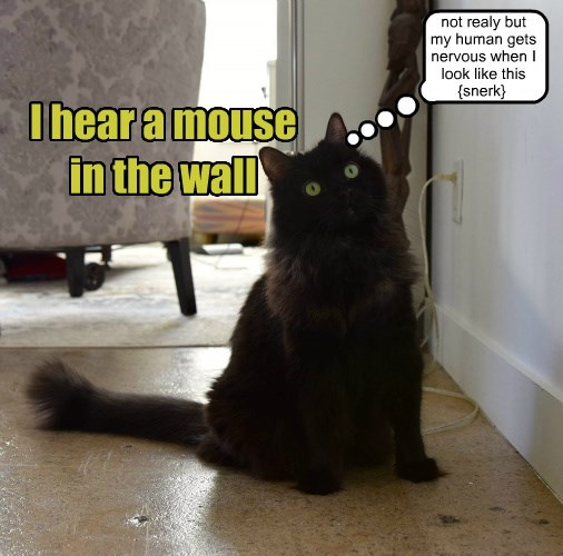 hear caption wall mouse Cats - 8766837248