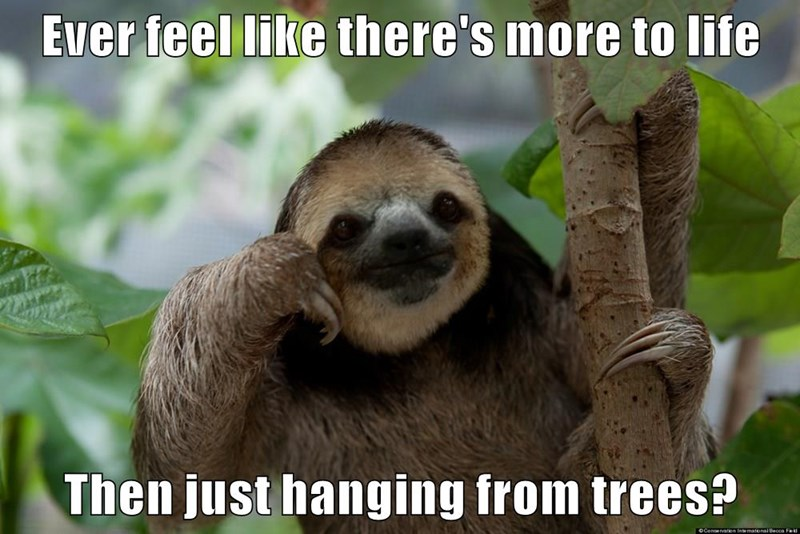 Ever feel like there's more to life  Then just hanging from trees?
