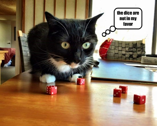 dice caption Cats - 8766875136