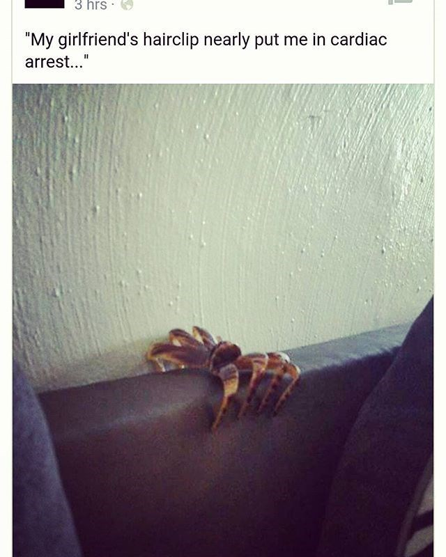 hair clip goes in cage not on couch