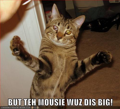 animals exaggerate caption Cats - 8766914048