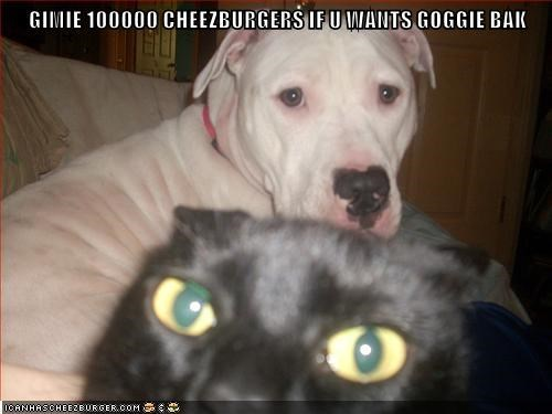 cat,dogs,cheezburgers,caption