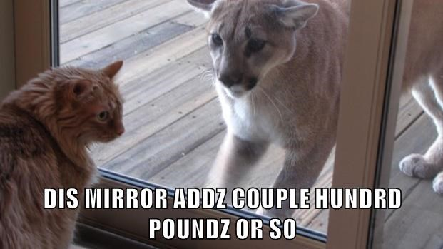 mirror,pounds,caption,Cats,cougar