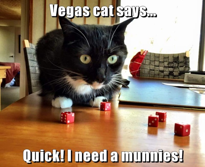 animals quick cat vegas munnies caption