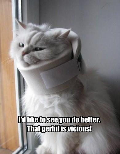 cat,gerbil,caption,vicious