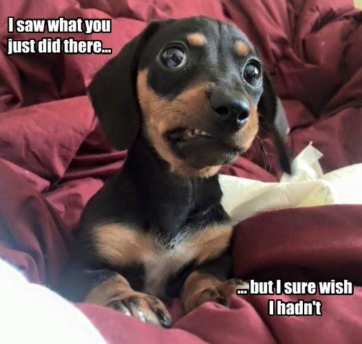 dogs saw hadn't wish caption - 8767336448