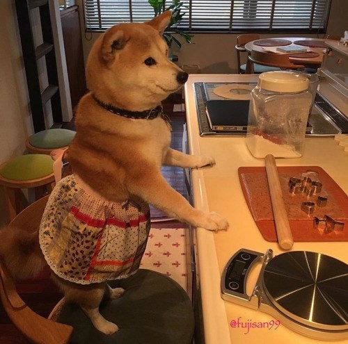 shiba inu cute apron Such Bake. Many Nutrients. Wow.