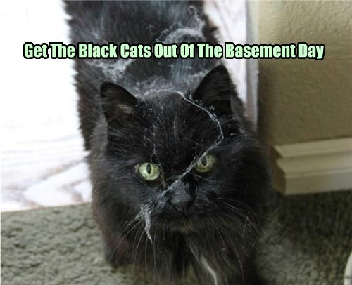 basement,day,caption,black cat