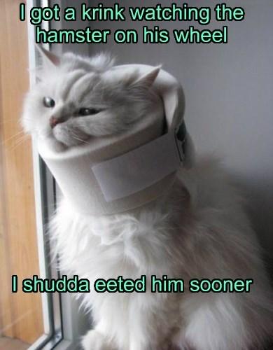 Cats caption hamster - 8767427584