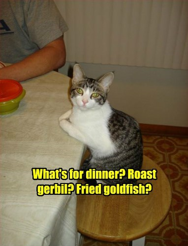 What's for dinner? Roast gerbil? Fried goldfish?