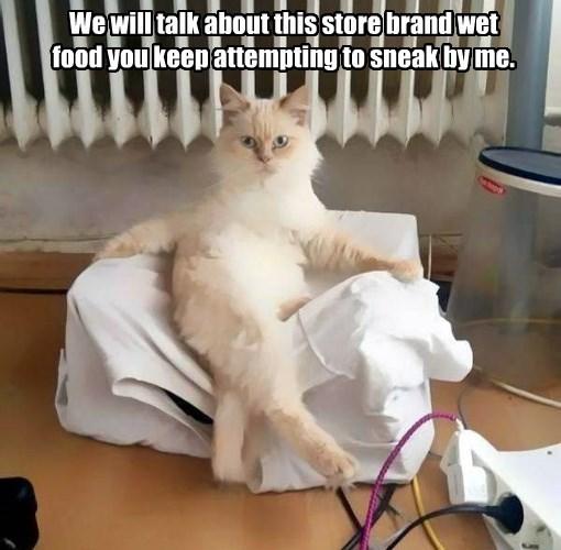 food caption Cats - 8767800832