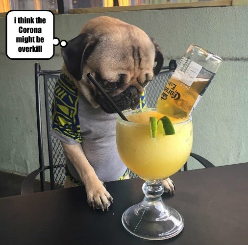 drinking,dogs,pug,corona,caption,margarita