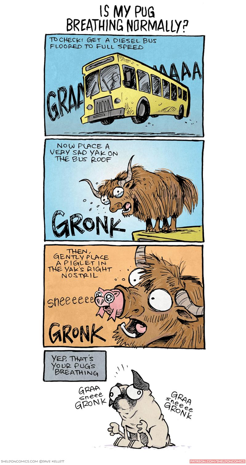 pug-breathing-web-comics-dogs-funny