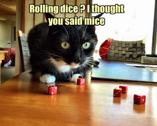 Cats caption dice - 8768253440