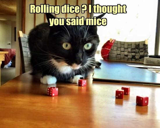 Cats caption dice - 8768253440