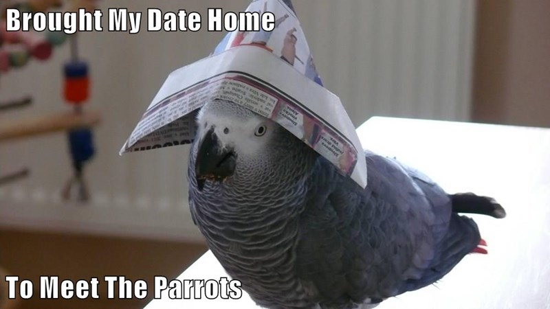Brought My Date Home  To Meet The Parrots