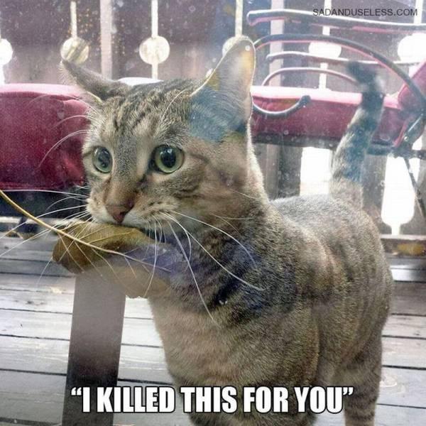 cute cats memes Wait, Don't Leaf!