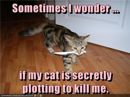 animals plotting caption Cats - 8768356352