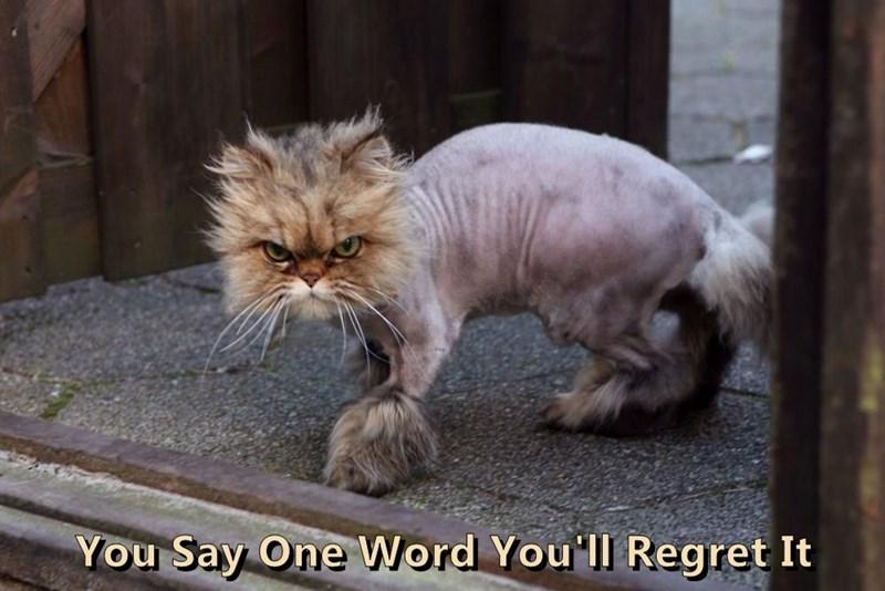 animals Cats caption - 8768382208