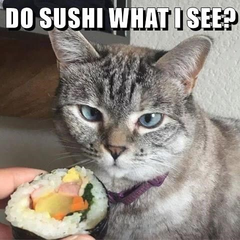 sushi,caption,Cats