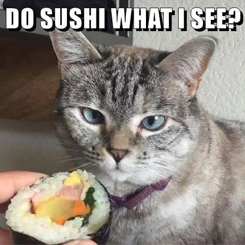 sushi caption Cats - 8768406784
